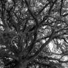 Canopy of Woodland Wonders