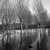 Flooded Copice