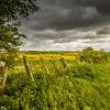 N_Bedford_Storm Coming.jpg