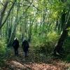 Reg-walk in the woods 287.jpg