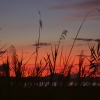 sunset-grasses