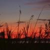sunset-grasses
