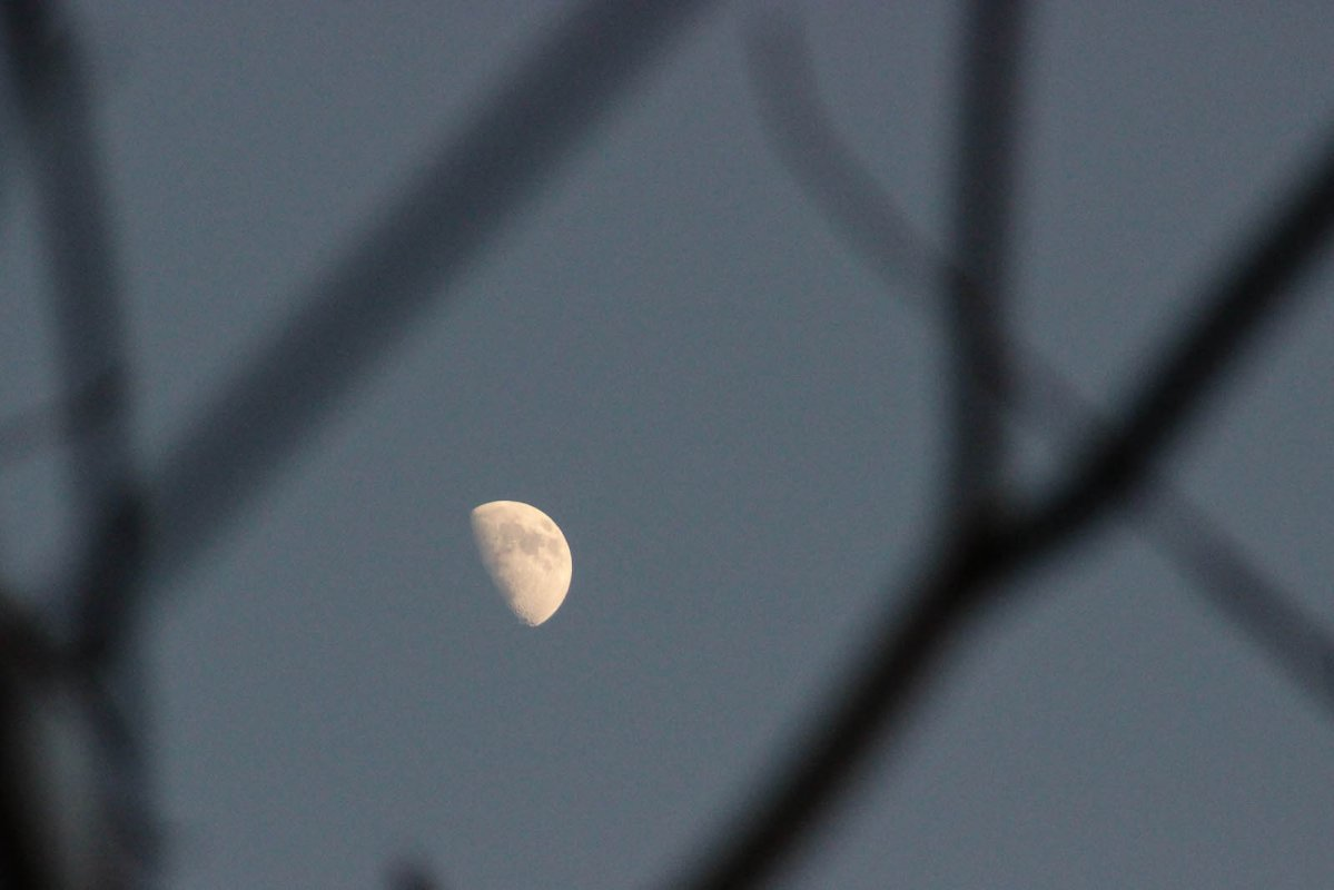 Moon in Branches