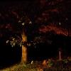 in-the-night-garden