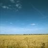 rampton-field