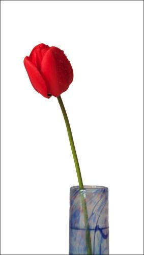 tulipinvase-psd