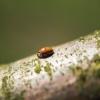 Crawling ladybird!