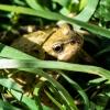 Camo-frog!