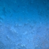 salmona-winter-1.jpg