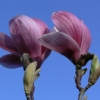 3-colin-brown-point-and-shoot-magnolia