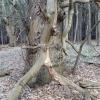 iphone-tree