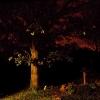 in-the-night-garden_0