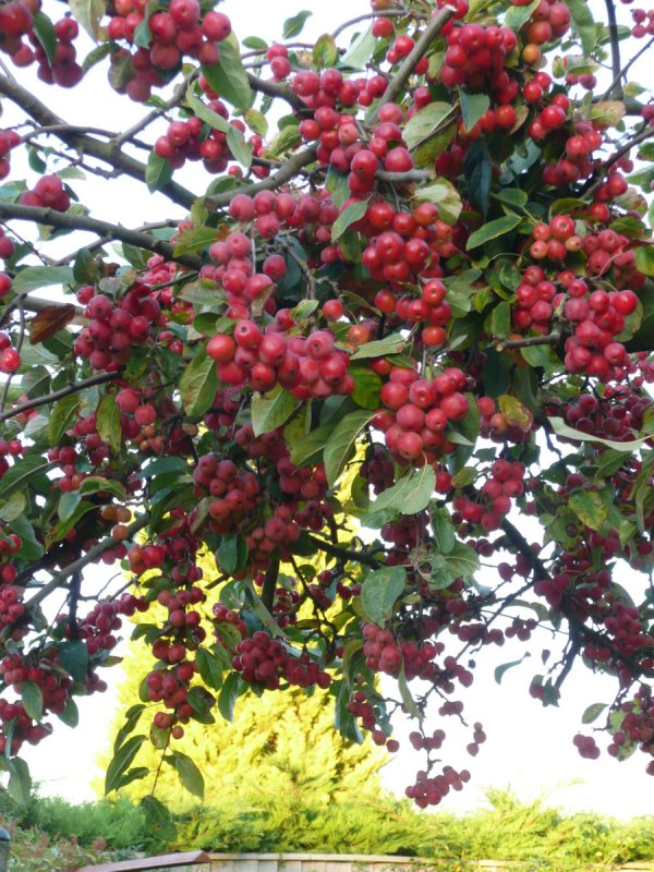Autumn Oct 2011 various locations 014