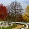 Anita Salmon - American Cemetery
