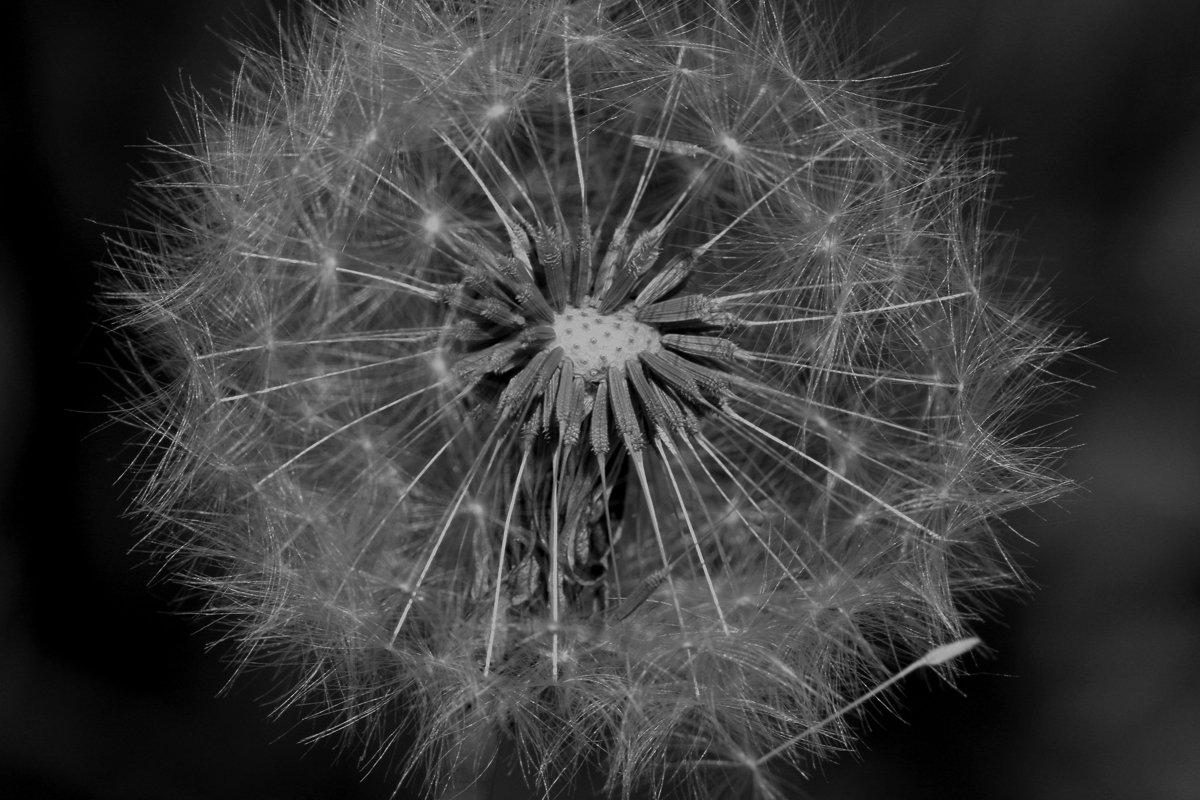 black-and-white-brenda-2