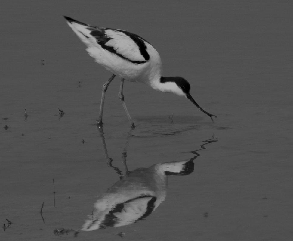 black-and-white-brenda-3