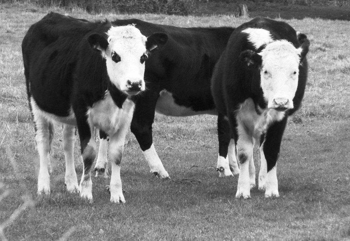 symon-black-and-white-1